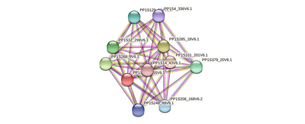 PP1S123_155V6.1 protein (Physcomitrella patens) - STRING interaction network