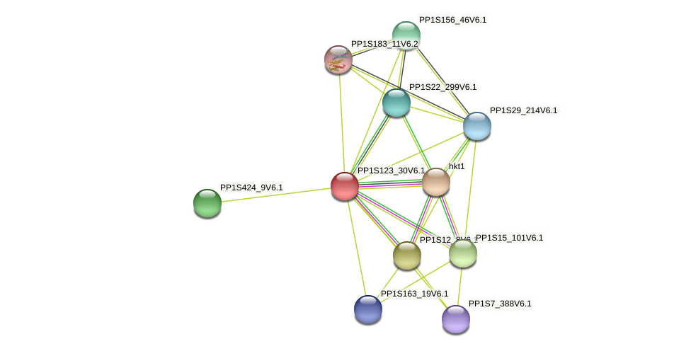 PP1S123_30V6.1 protein (Physcomitrella patens) - STRING interaction network