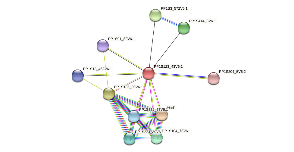 PP1S123_43V6.1 protein (Physcomitrella patens) - STRING interaction network