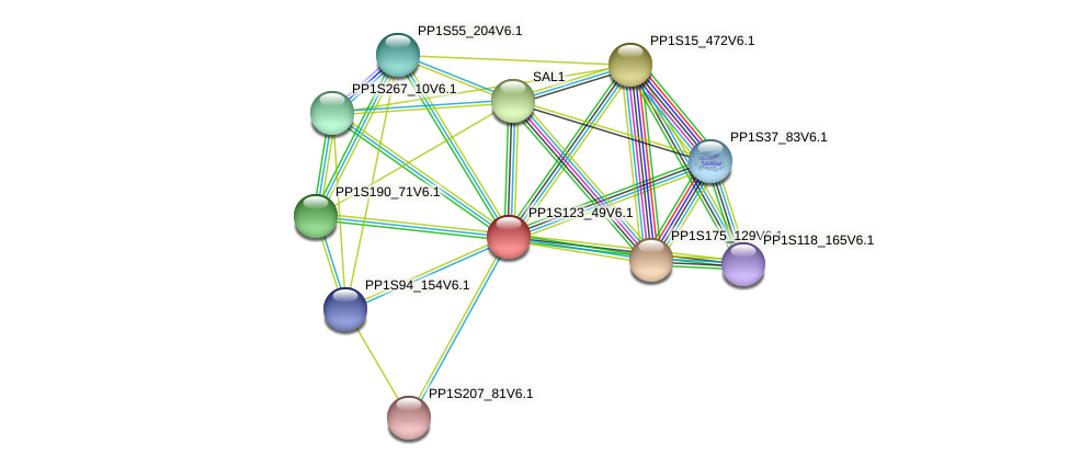PP1S123_49V6.1 protein (Physcomitrella patens) - STRING interaction network