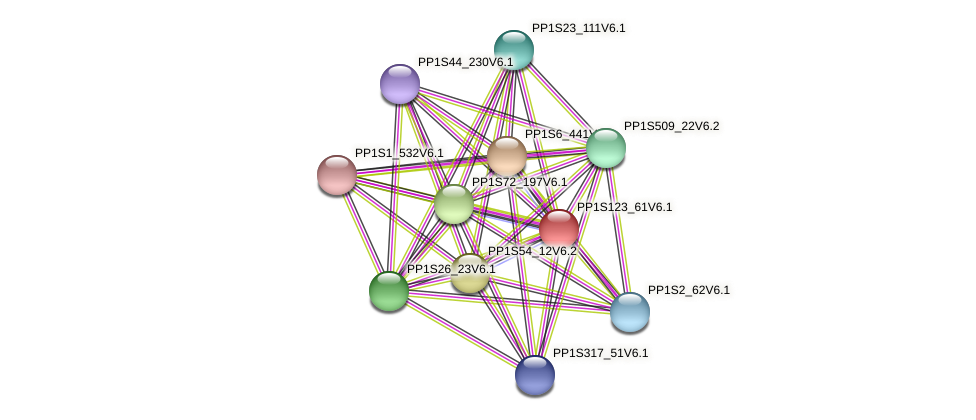 PP1S123_61V6.1 protein (Physcomitrella patens) - STRING interaction network