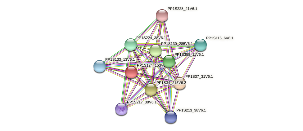 PP1S124_153V6.1 protein (Physcomitrella patens) - STRING interaction network