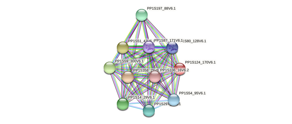 PP1S124_170V6.1 protein (Physcomitrella patens) - STRING interaction network