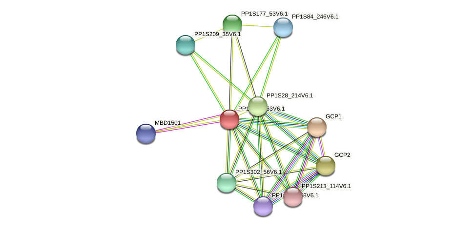 PP1S125_63V6.1 protein (Physcomitrella patens) - STRING interaction network