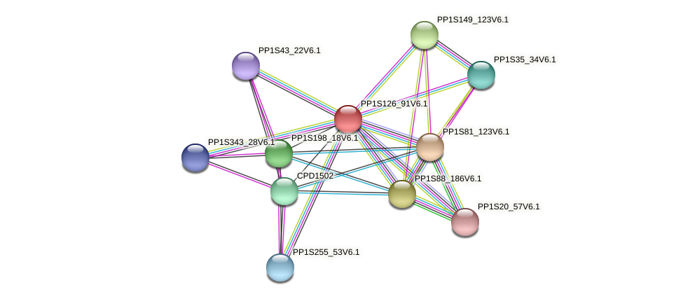 PP1S126_91V6.1 protein (Physcomitrella patens) - STRING interaction network