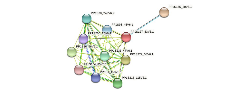 PP1S127_53V6.1 protein (Physcomitrella patens) - STRING interaction network