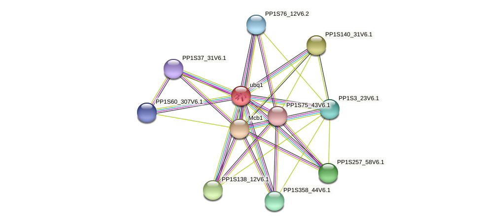 ubq1 protein (Physcomitrella patens) - STRING interaction network