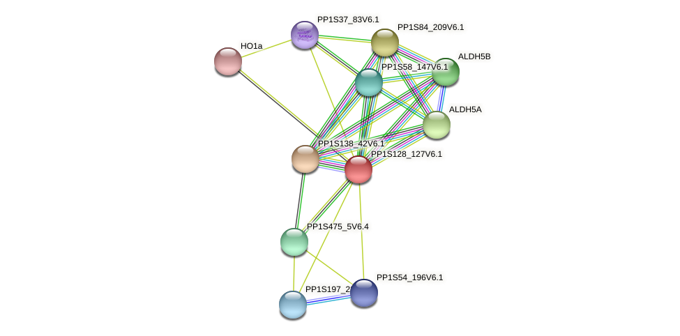 PP1S128_127V6.1 protein (Physcomitrella patens) - STRING interaction network