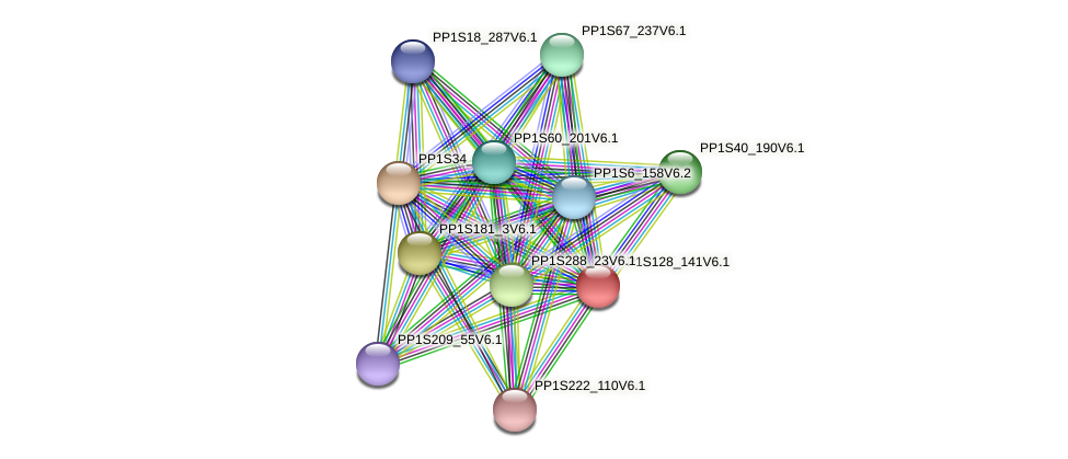 PP1S128_141V6.1 protein (Physcomitrella patens) - STRING interaction network
