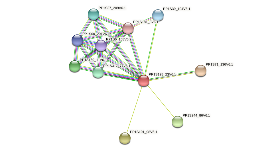 PP1S128_23V6.1 protein (Physcomitrella patens) - STRING interaction network