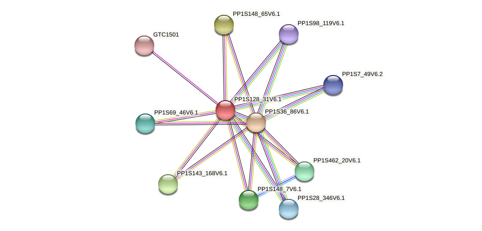 PP1S128_31V6.1 protein (Physcomitrella patens) - STRING interaction network