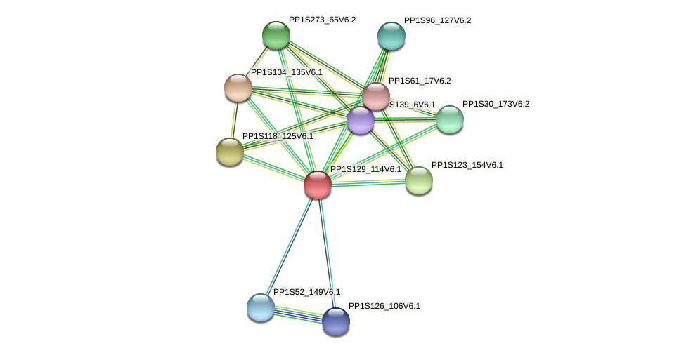 PP1S129_114V6.1 protein (Physcomitrella patens) - STRING interaction network
