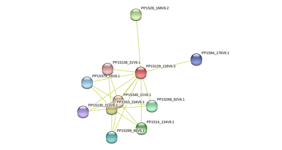 PP1S129_118V6.1 protein (Physcomitrella patens) - STRING interaction network