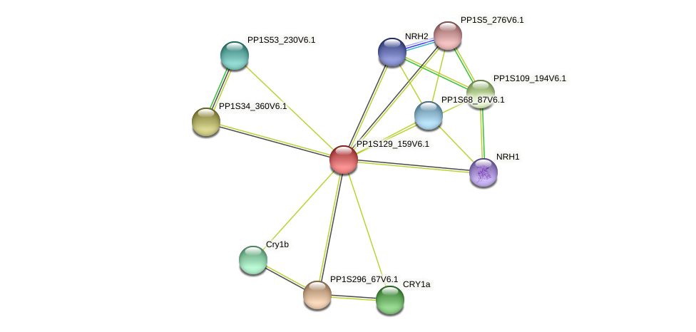 PP1S129_159V6.1 protein (Physcomitrella patens) - STRING interaction network