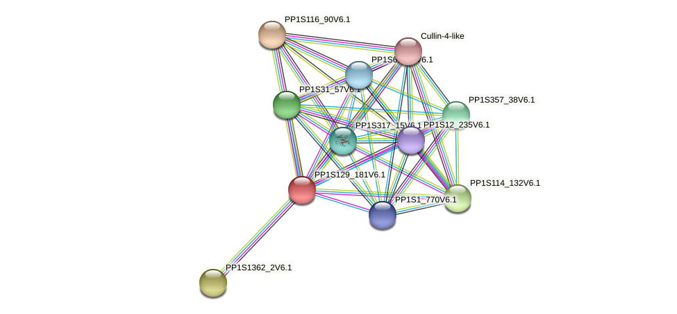PP1S129_181V6.1 protein (Physcomitrella patens) - STRING interaction network
