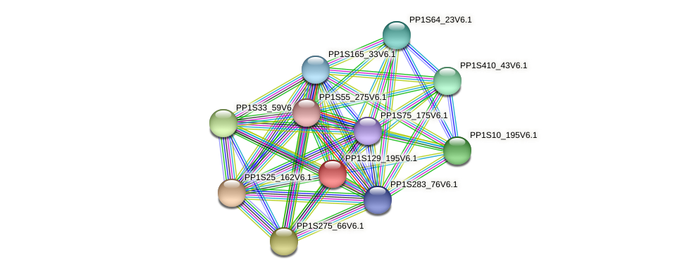 PP1S129_195V6.1 protein (Physcomitrella patens) - STRING interaction network