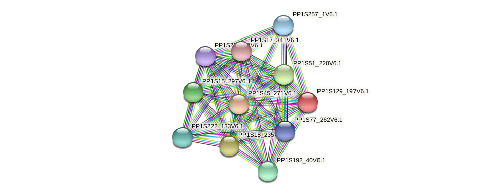 PP1S129_197V6.1 protein (Physcomitrella patens) - STRING interaction network