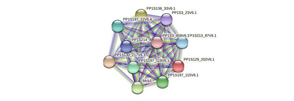 PP1S129_202V6.1 protein (Physcomitrella patens) - STRING interaction network