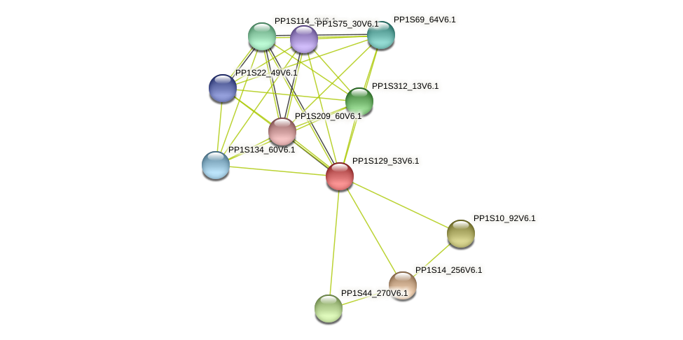 PP1S129_53V6.1 protein (Physcomitrella patens) - STRING interaction network