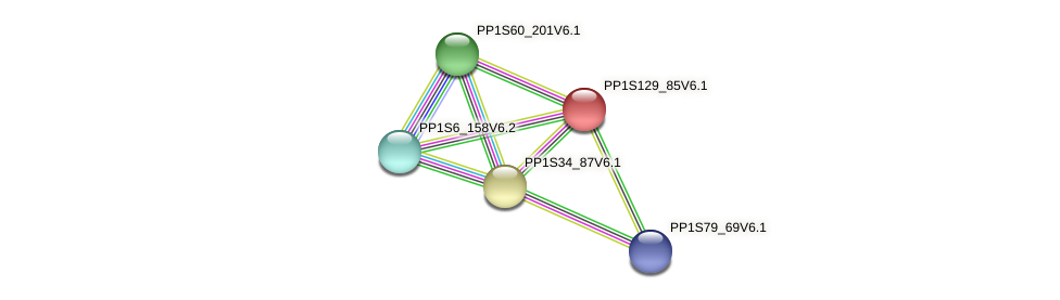 PP1S129_85V6.1 protein (Physcomitrella patens) - STRING interaction network