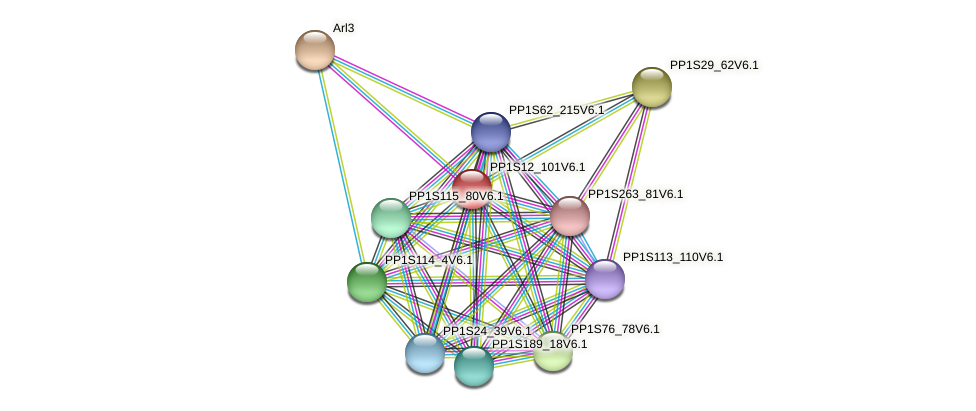 PP1S12_101V6.1 protein (Physcomitrella patens) - STRING interaction network