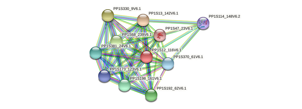 PP1S12_116V6.1 protein (Physcomitrella patens) - STRING interaction network