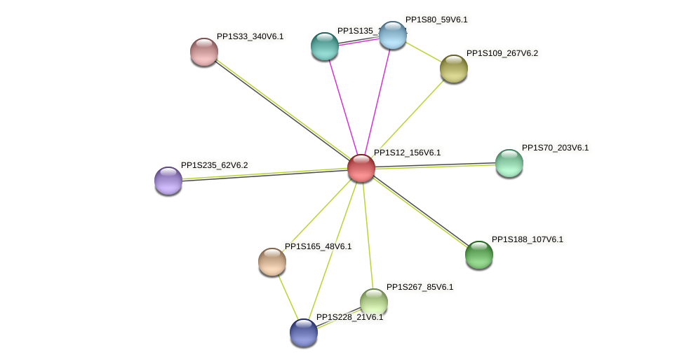 PP1S12_156V6.1 protein (Physcomitrella patens) - STRING interaction network