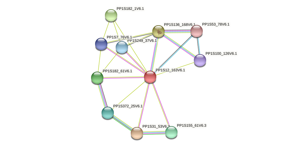 PP1S12_163V6.1 protein (Physcomitrella patens) - STRING interaction network