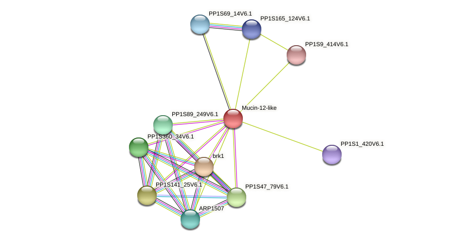PP1S12_202V6.1 protein (Physcomitrella patens) - STRING interaction network