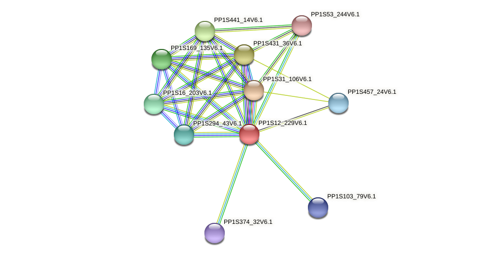 PP1S12_229V6.1 protein (Physcomitrella patens) - STRING interaction network