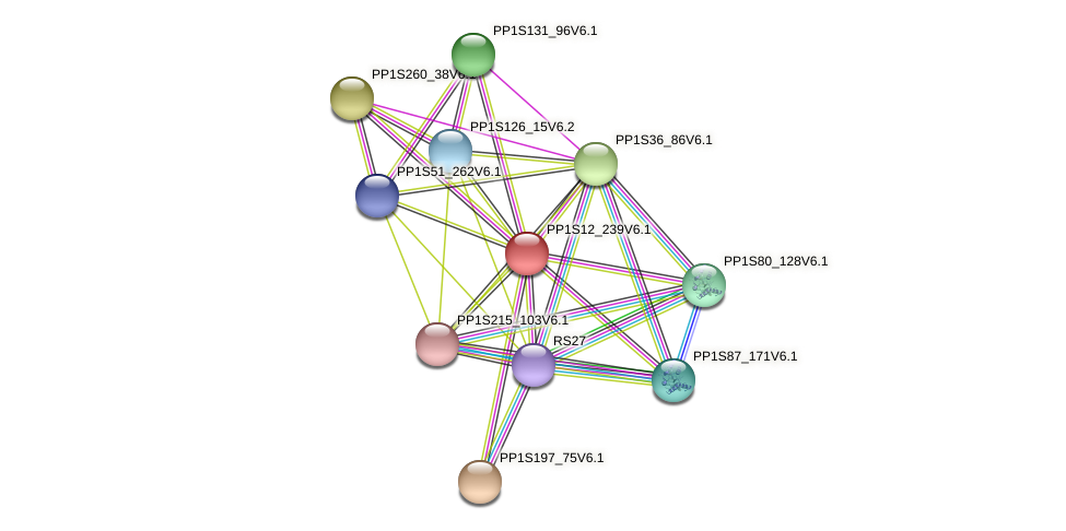 PP1S12_239V6.1 protein (Physcomitrella patens) - STRING interaction network