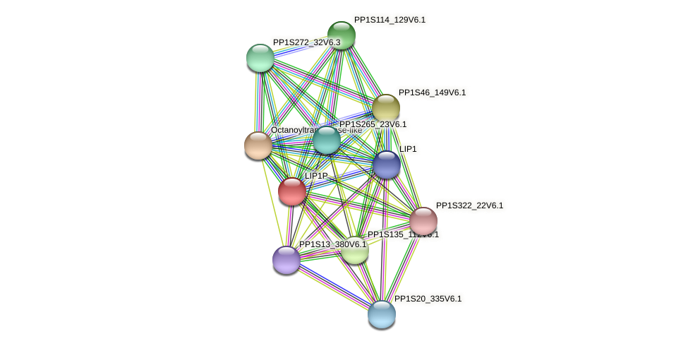PP1S12_246V6.1 protein (Physcomitrella patens) - STRING interaction network