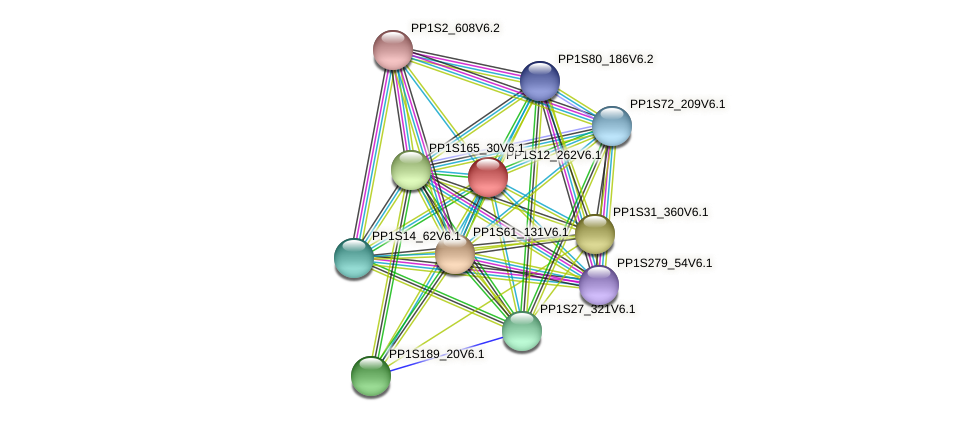 PP1S12_262V6.1 protein (Physcomitrella patens) - STRING interaction network