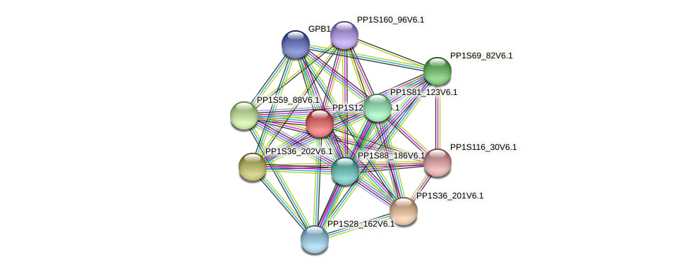 PP1S12_264V6.1 protein (Physcomitrella patens) - STRING interaction network