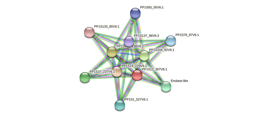 PP1S12_307V6.1 protein (Physcomitrella patens) - STRING interaction network