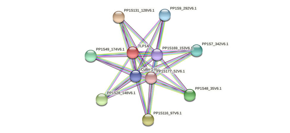 TLP1A protein (Physcomitrella patens) - STRING interaction network