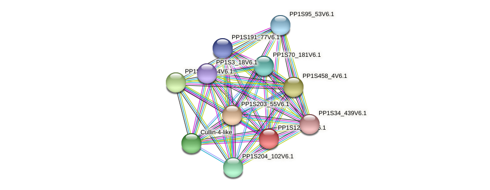 PP1S12_367V6.1 protein (Physcomitrella patens) - STRING interaction network