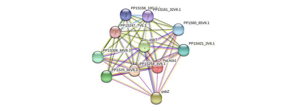 PpLhcb1 protein (Physcomitrella patens) - STRING interaction network