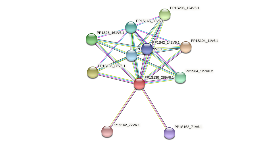 PP1S130_289V6.1 protein (Physcomitrella patens) - STRING interaction network