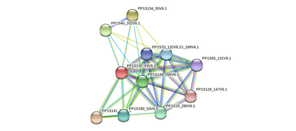 PP1S130_43V6.1 protein (Physcomitrella patens) - STRING interaction network
