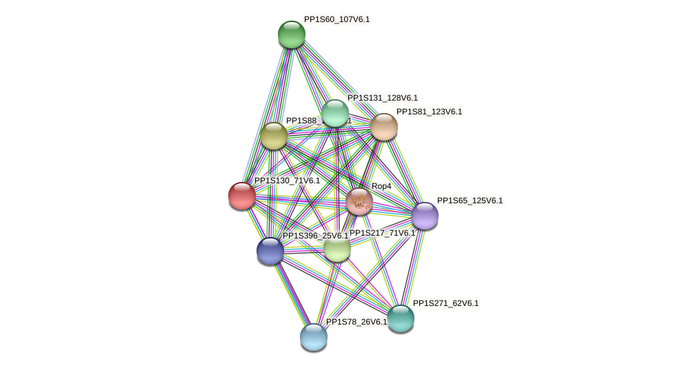 PP1S130_71V6.1 protein (Physcomitrella patens) - STRING interaction network