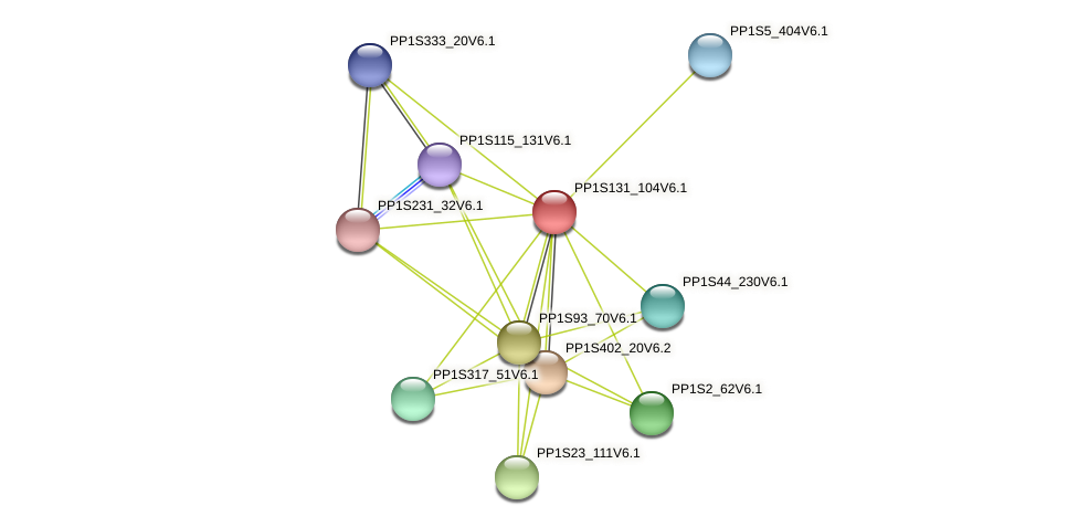 PP1S131_104V6.1 protein (Physcomitrella patens) - STRING interaction network