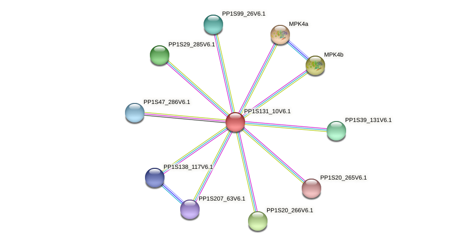 PP1S131_10V6.1 protein (Physcomitrella patens) - STRING interaction network