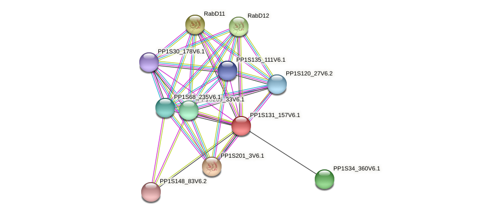 PP1S131_157V6.1 protein (Physcomitrella patens) - STRING interaction network