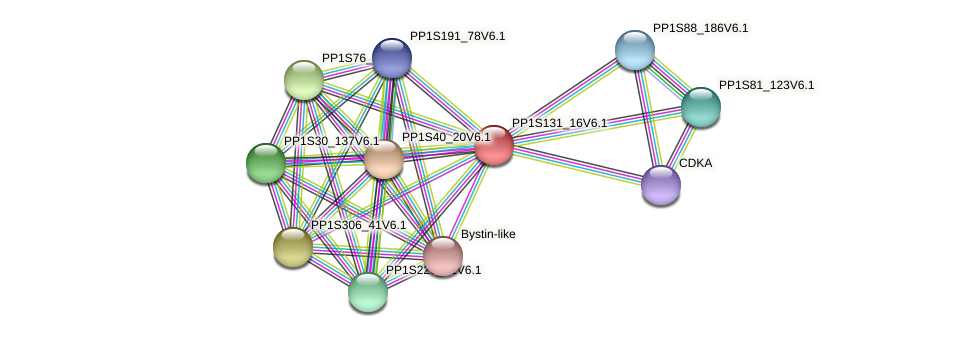 PP1S131_16V6.1 protein (Physcomitrella patens) - STRING interaction network