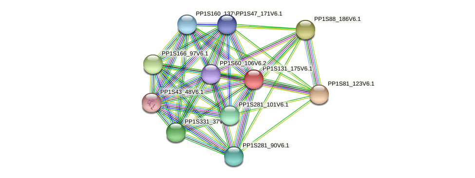 PP1S131_175V6.1 protein (Physcomitrella patens) - STRING interaction network