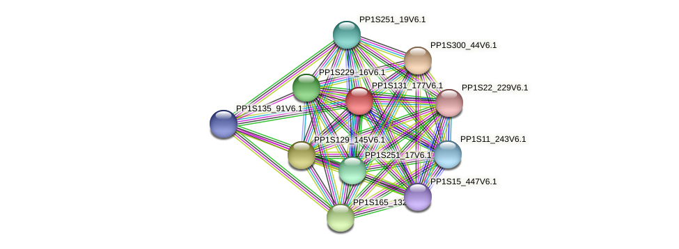 PP1S131_177V6.1 protein (Physcomitrella patens) - STRING interaction network
