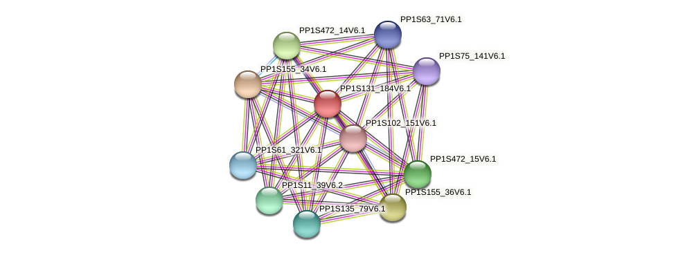 PP1S131_184V6.1 protein (Physcomitrella patens) - STRING interaction network