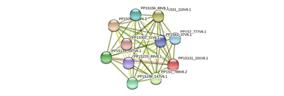 PP1S131_191V6.1 protein (Physcomitrella patens) - STRING interaction network