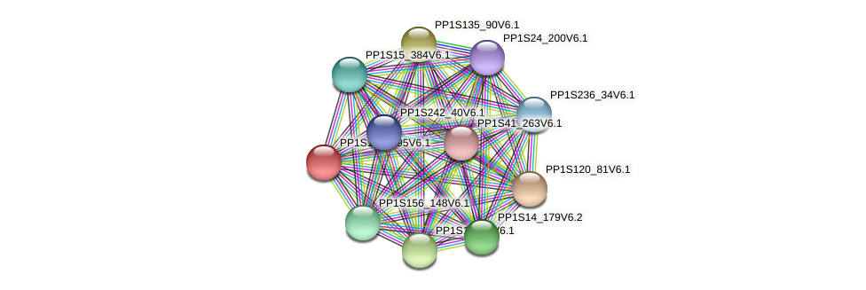 PP1S131_195V6.1 protein (Physcomitrella patens) - STRING interaction network
